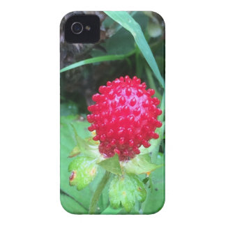 Wild Berry iPhone 4 Cover