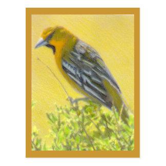 Wild Bird Colored Pencil Drawing Postcard