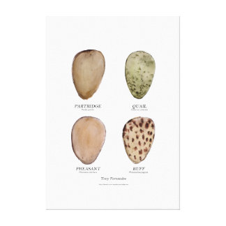 wild bird egg collection 5, tony fernandes canvas print