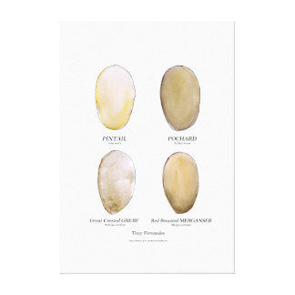 wild bird egg collection 6, tony fernandes canvas print