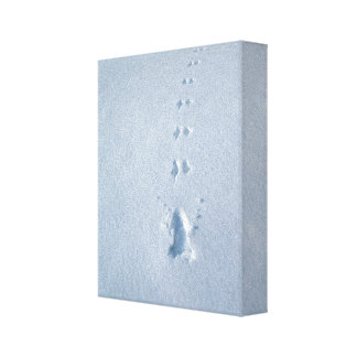 Wild Bird Footprints in Snow Canvas Print
