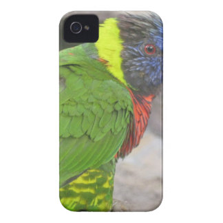 Wild Bird Products iPhone 4 Cover