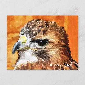 WILD BIRDS HAWK UK postcard