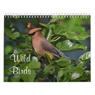 Wild birds in New England Calendar