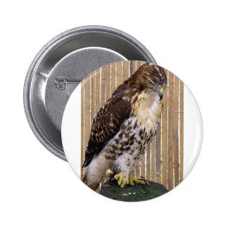 Wild Birds: Red-Tailed Hawk Pins