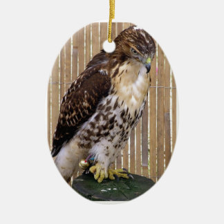 Wild Birds Red-Tailed Hawk Ornament