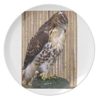 Wild Birds: Red-Tailed Hawk Dinner Plates
