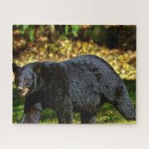 Wild Black Bear. Jigsaw Puzzle