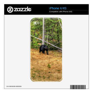 Wild Black Bear & Yukon Forest Photo Art Decals For iPhone 4