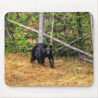 Wild Black Bear & Yukon Forest Photo Art Mouse Pad