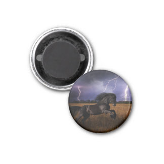 Wild Black Horse Magnet