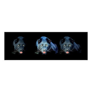 Wild Black Jaguar Cat Eyes Blue Tones Poster