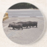 Wild Black Pigs Coasters