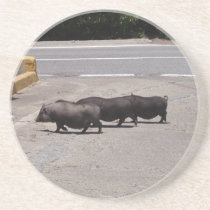 Wild Black Pigs Drink Coaster