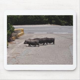 Wild Black Pigs Mouse Pad