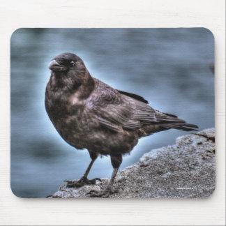 Wild Black Raven Standing on Rocks Mouse Pad
