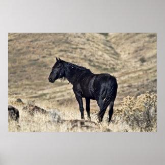 Wild Black Stallion Poster