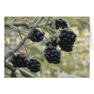 Wild Blackberries Card