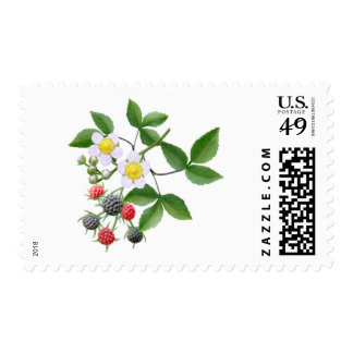 Wild Blackberries Postage