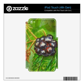Wild Blackberries ripening in Summer iPod Touch 4G Skins