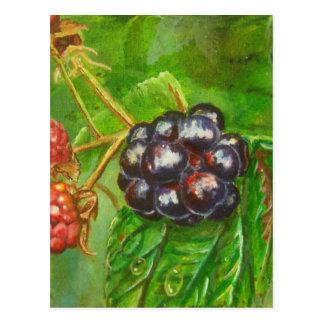 Wild Blackberries ripening in Summer Postcard