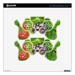 Wild Blackberries ripening in Summer PS3 Controller Skins