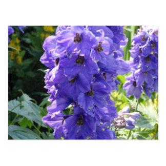 Wild Blue Foxglove Postcard