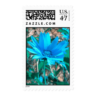 Wild Blue Sunflower Postage