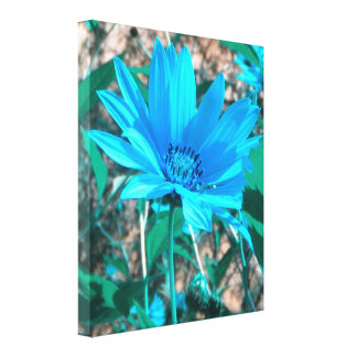 Wild Blue Sunflower Wrapped Canvas Print