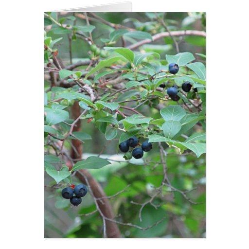 Wild Blueberries Card