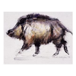 Wild Boar 1999 Postcard