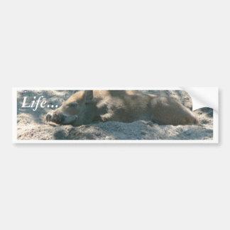 Wild Boar Piglet Bumper Sticker