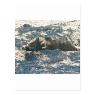 Wild Boar Piglet Postcard