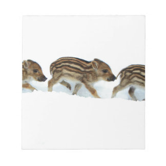 Wild Boar Piglets In The Snow, Germany Notepad