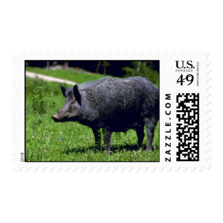 Wild Boar Postage