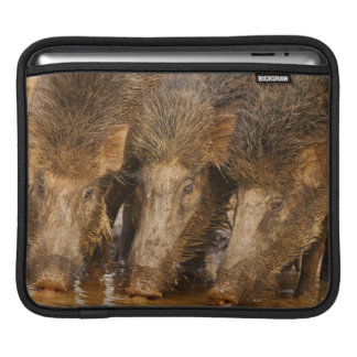 Wild Boars drinking water in the waterhole Sleeve For iPads