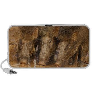 Wild Boars drinking water in the waterhole Laptop Speakers