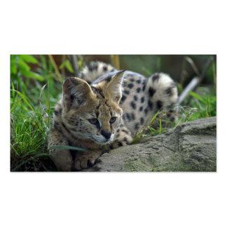 Wild Bobcat Business Card Templates