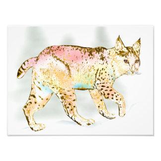 Wild Bobcat in Color Photo Print