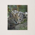 Wild Bobcat Jigsaw Puzzles