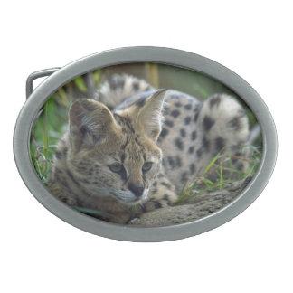Wild Bobcat Oval Belt Buckle
