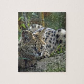 Wild Bobcat Puzzle