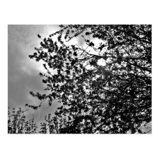 Wild branches postcard