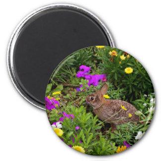 Wild Brown Rabbit Photography Magnet