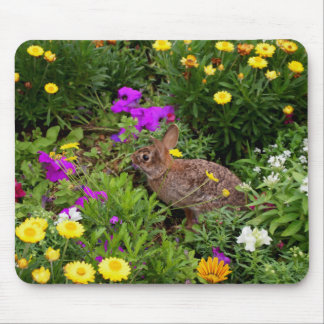 Wild Brown Rabbit Photography Mouse Pad