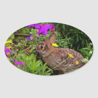 Wild Brown Rabbit Photography Oval Sticker