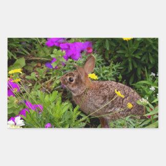 Wild Brown Rabbit Photography Rectangular Sticker