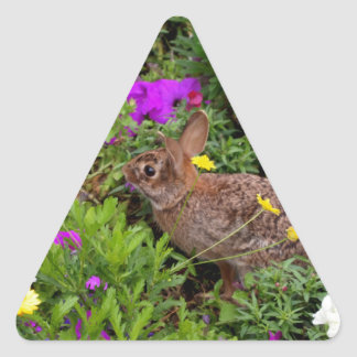 Wild Brown Rabbit Photography Triangle Sticker