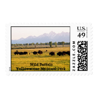 Wild Buffalo Herd Postage