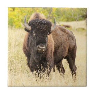Wild Buffalo in a Field Ceramic Tile